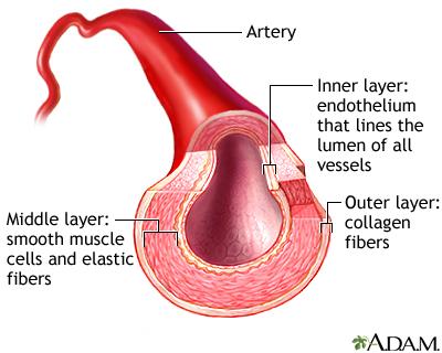 หลอดเลือดแดง artery